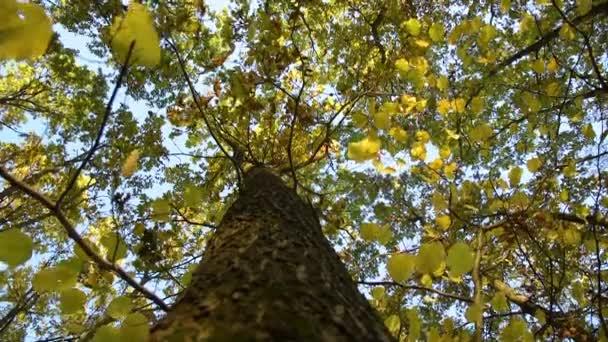 Ősszel az erdőben