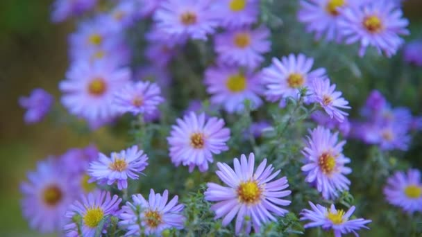őszi virág háttér