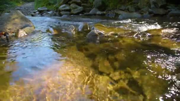 lesní horská řeka
