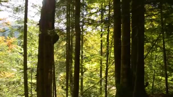 Epic Mountain Forest