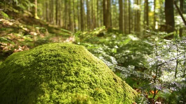 Kouzelný horský Les