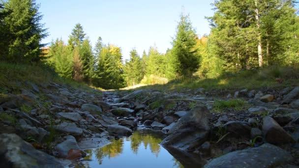 Stream na lesní cestě