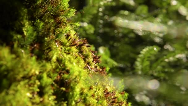 Epic hegyi erdő