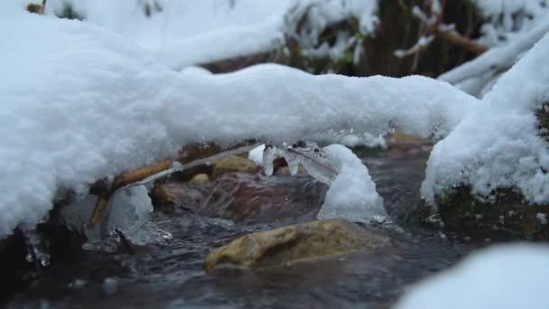 Stream s sněhu a ledu v zimě lese