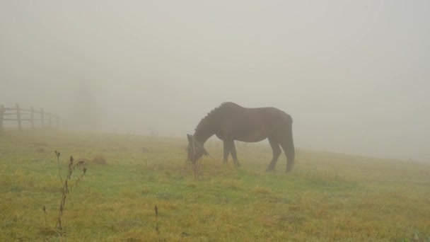 Horse in fog on pasture