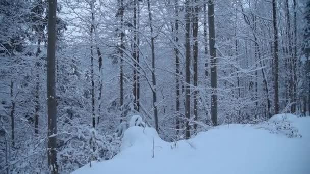 zasněžené silnici v lese