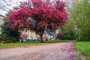 Scenic Springtime View of a Winding Garden Path Lined by Beautif