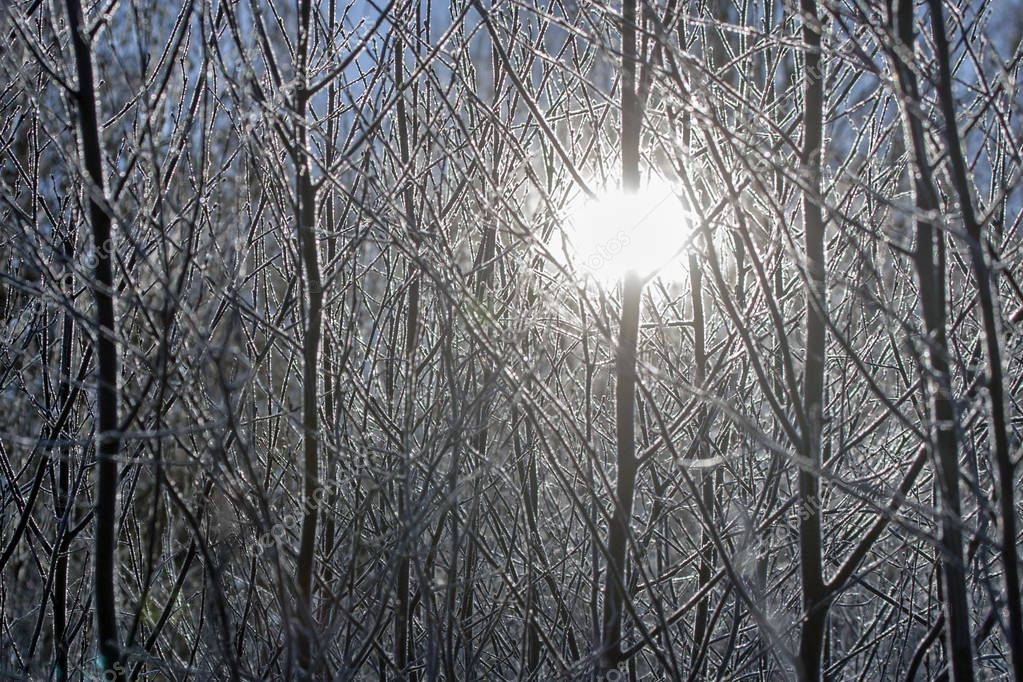 The sun shining through the frozen bushes on a winter day