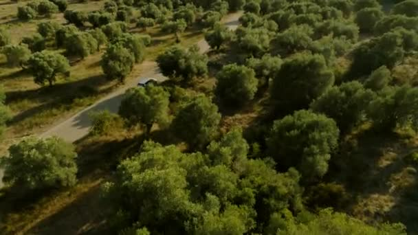 Aerial shot flying over amazing green forest with high green trees and bushes car parking on highway