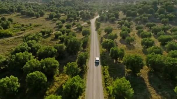 Shooting from helicopter rapid movement of white SUV car on asphalt highway in the middle of beautiful summer landscape with forest high green thick trees and sunbeams at sunset aerial shot