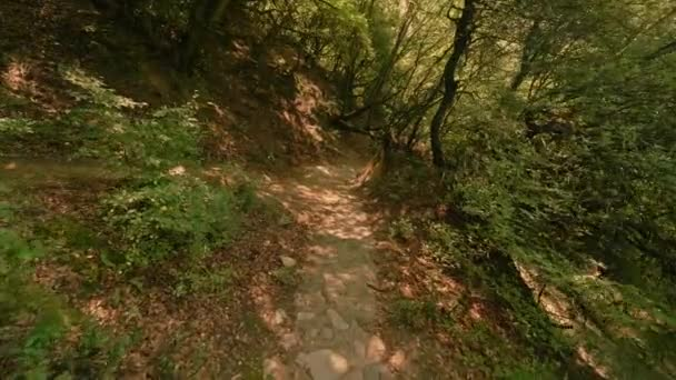 POV shot someone slowly walking on path in hilly terrain at summer forest thicket