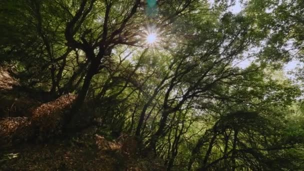 Rotating shot bright yellow sun shining through dense green trees branches panoramic rotation shot