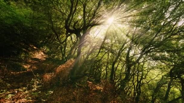 Rotation shot amazing forest park landscape surrounded by yellow bright summer sun beams shining