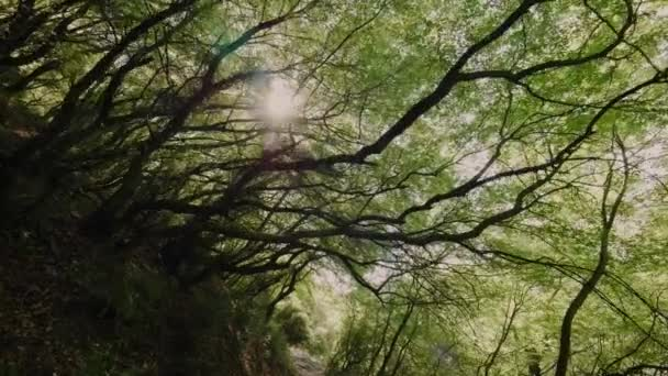 POV shot slowly moving under dense green trees trunk walking in summer forest park low angle