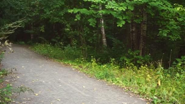 Polní cesta lesem