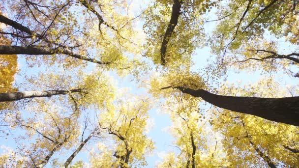 Nézd a korona őszi fák alacsony pont