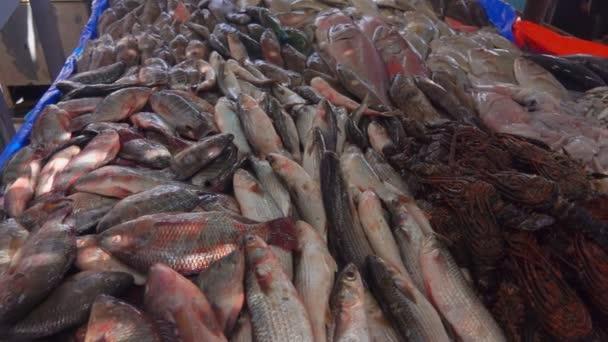 Friss fogást a halak és a homár