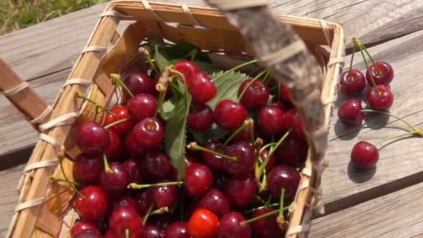 Berries ripe sweet cherries fall on a wooden table
