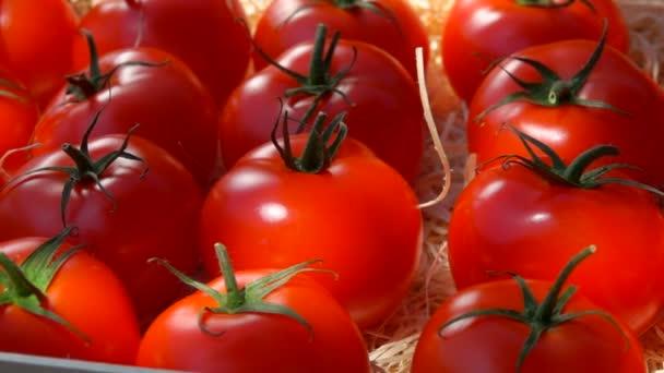 Panorama na zralá šťavnatá červená rajčata