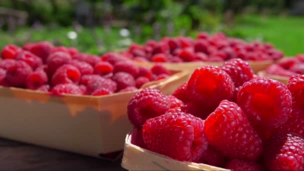 Hand puts a ripe juicy raspberry into the wicker basket