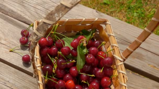 Panorama of juicy red cherries falling next to the basket on the wooden table