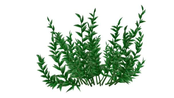 3d rendering of a growing realistic plant isolated on white background