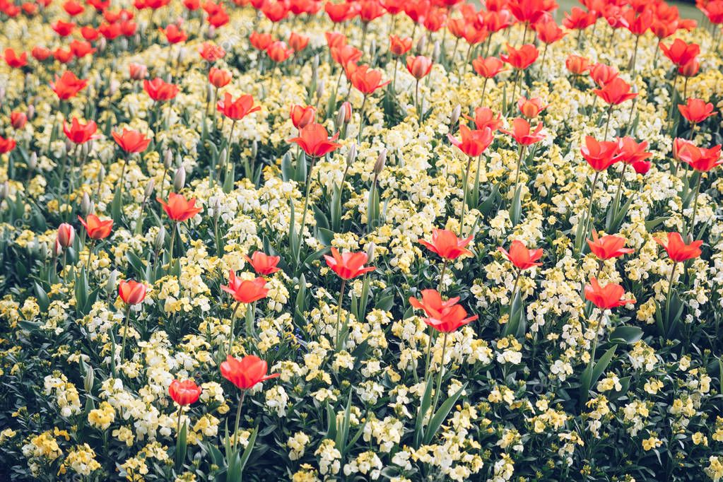 Poppy flowers, buds and pods