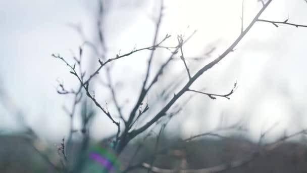 a közeli fák csupasz ágak