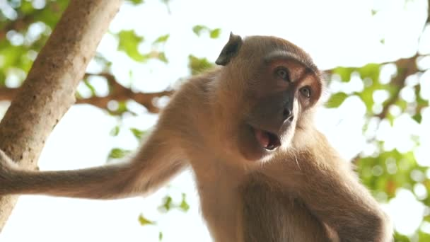 monkey on the tree close up