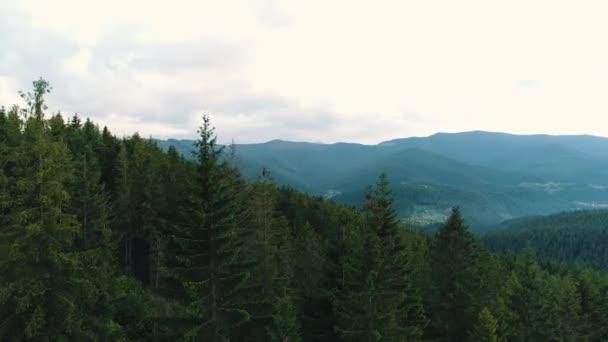 pohled shora na jehličnatý horský les