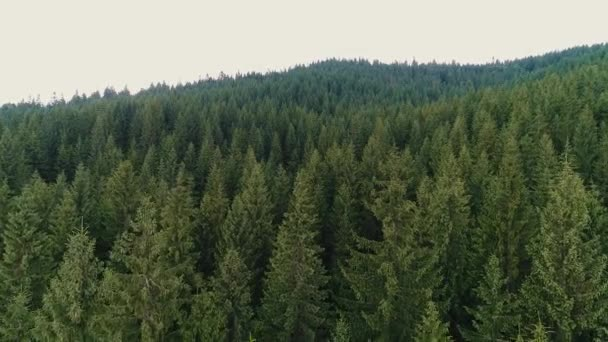 pohled shora na jehličnatý les