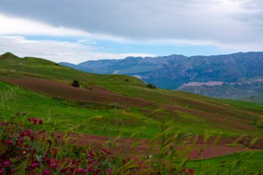 Landscape with colorful blossoming pastures and fields, honey flowers sulla from Sicily, agriculture in South Italy