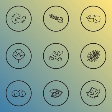Ecology icons line style set with ginger, cotton flower, chickpeas and other nutrition elements. Isolated  illustration ecology icons.