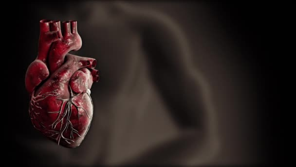 Heart and heart beat pulse video for medical apps and websites.