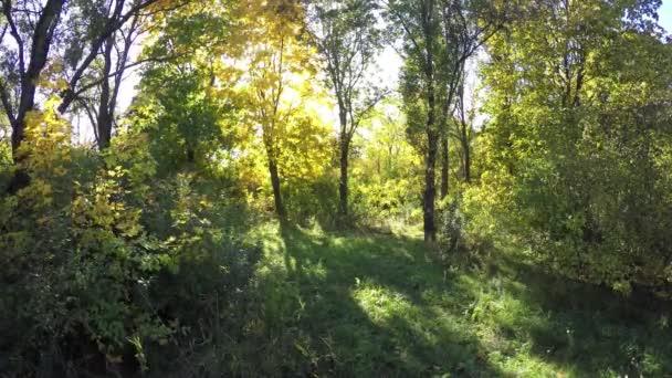 Steadicam letí přes strom řádek. Stabilizované video z podzimní procházka se slunce prohlížení za stromy