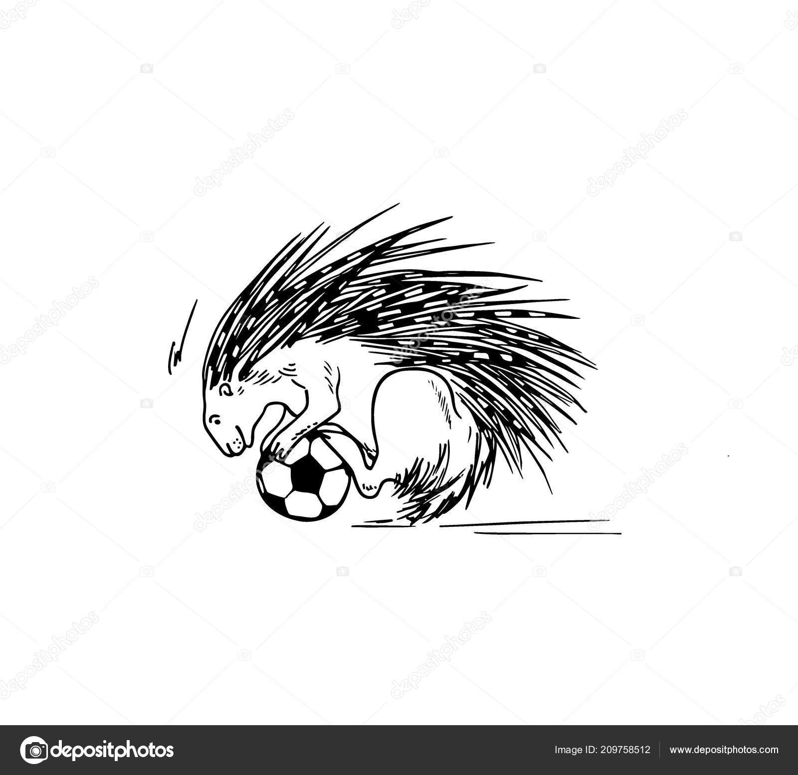 Hand Gezeichnet Stachelschwein Fussball Spielen Stockvektor
