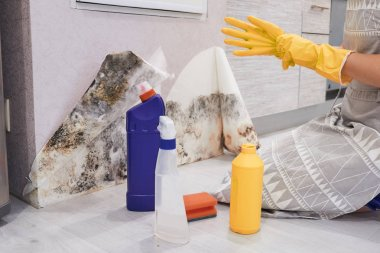 Housekeepers Hand With Glove Cleaning Mold From Wall With Sponge And Spray Bottle