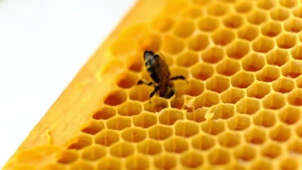 Méz fésű. Töredéke műanyag méhsejt utánzat. Absztrakt háttér.