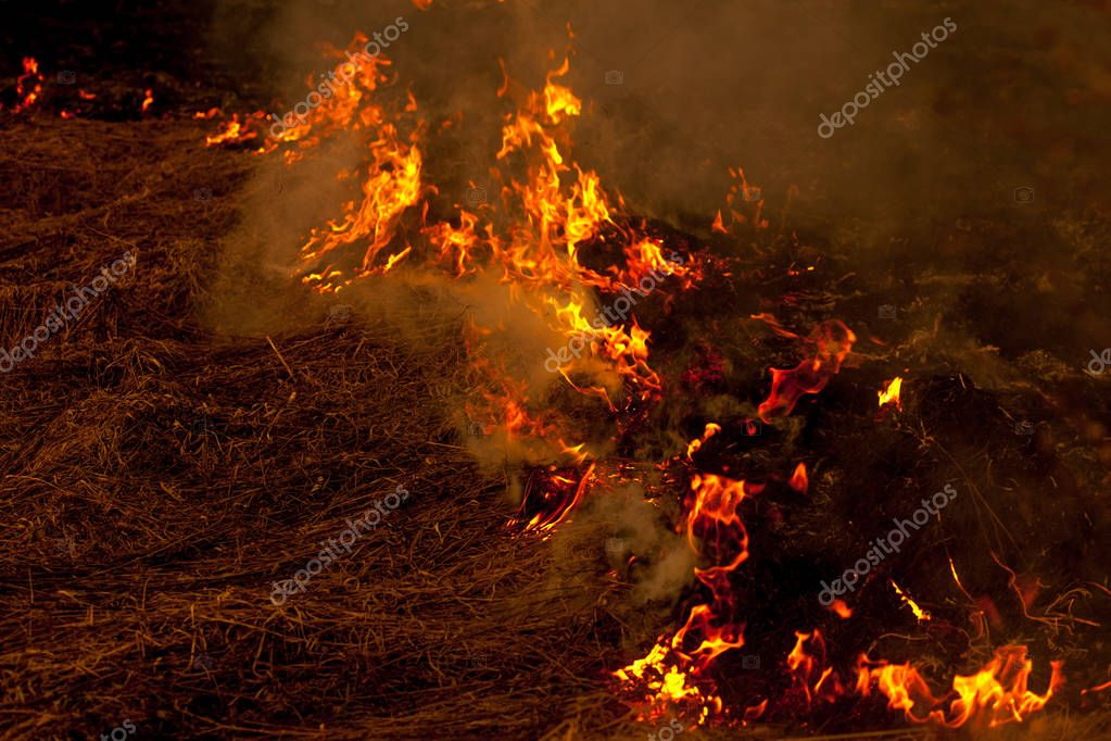 A strong fire spreads in gusts of wind through dry grass, smoking dry grass, concept of fire and burning of the forest