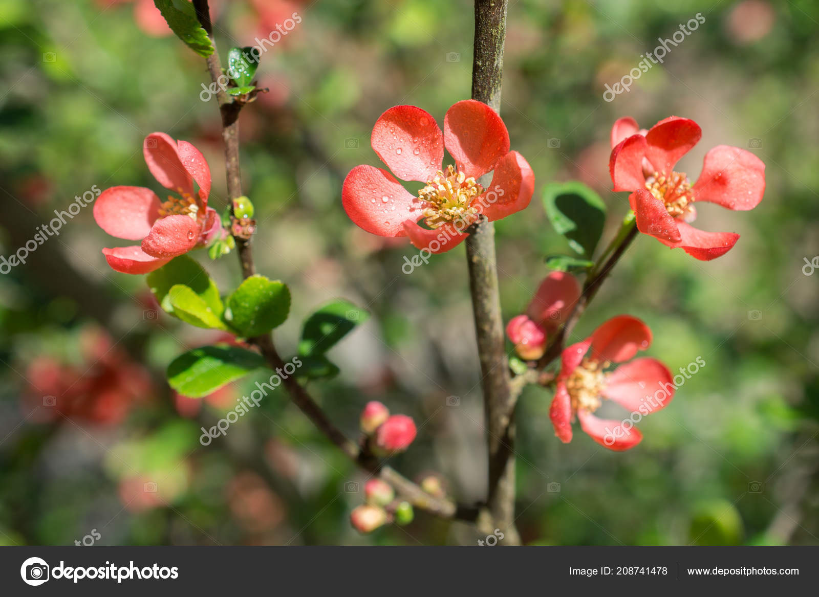Tree Bloom Blossom Beautiful Flowers Spring Season Stock Photo