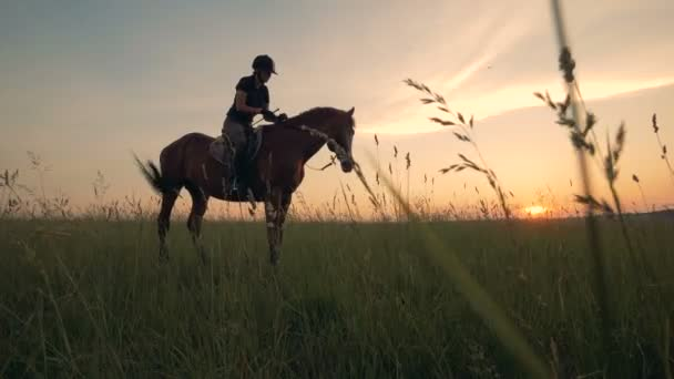 a woman on a horse outdoors female rider is on a horse in the field