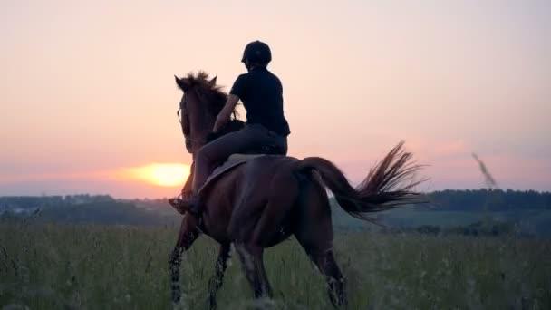 Hřebec je tryskem přes pole s ženské rider