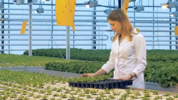 Üvegházhatást okozó munkavállaló áttelepül edények saláta