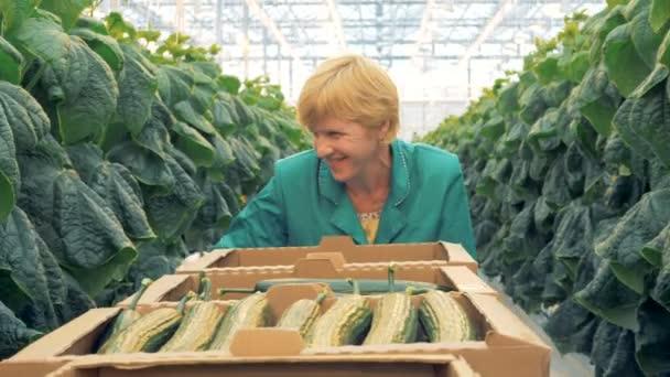 Egy munkavállaló úgy néz ki, az uborkára, az üvegházhatást okozó.
