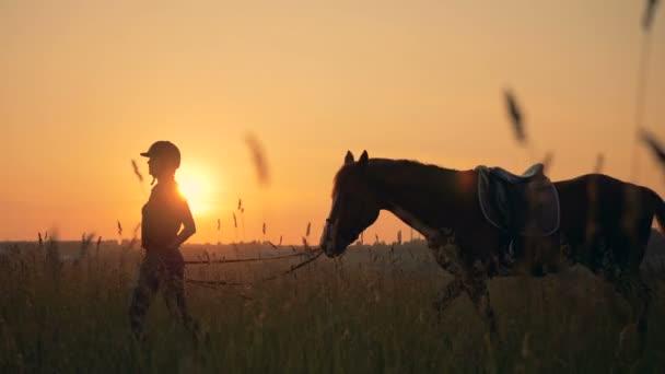 conceito de amor humano e animal uma mulher leva o cavalo dela