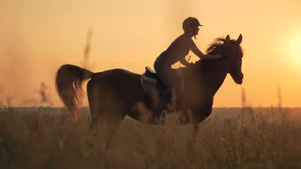 Image of: Summar Nassar Woman Mounts Horse In The Field Side View Human And Animal Love Concept Stock Footage Depositphotos Woman Mounts Horse In The Field Side View Human And Animal Love