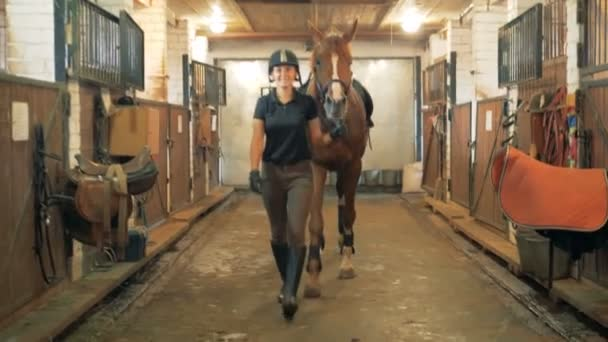 Athlete walks with a horse through a stable. Human and animal love concept.