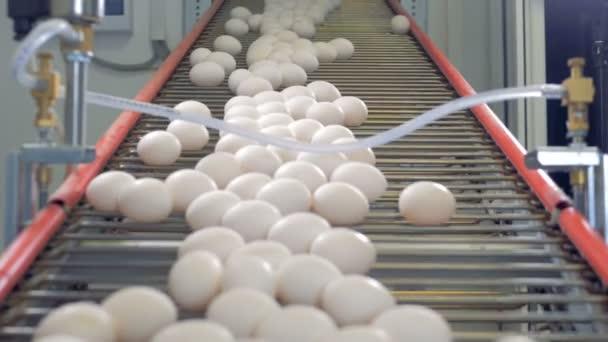 Tiszta tojás automatizált vonalon mozgó, közelről.