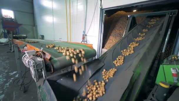 Tovární stroje pohyb partií brambor, zblízka