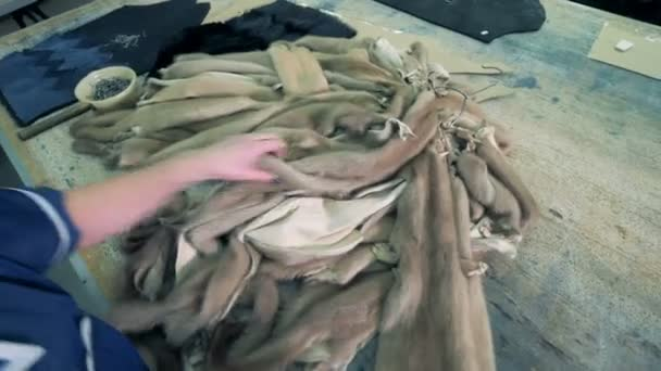Halott bőr állat az asztalra egy gyárban. 4k.